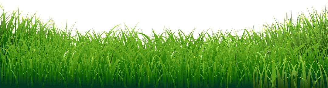 decorative grass border
